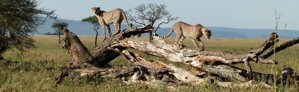 Carita Parkkinen kuvasi Afrikan villiä luontoa työharjoittelujaksollaan