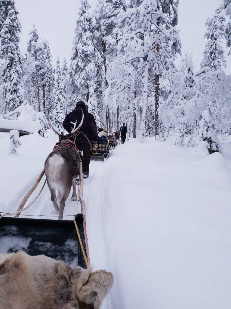 Lapland husky safari