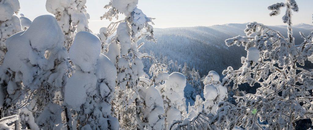 Kuvassa talvinen ja aurinkoinen maisema, kuvan etualalla puita lumen peitossa ja taustalla vuoristoa.