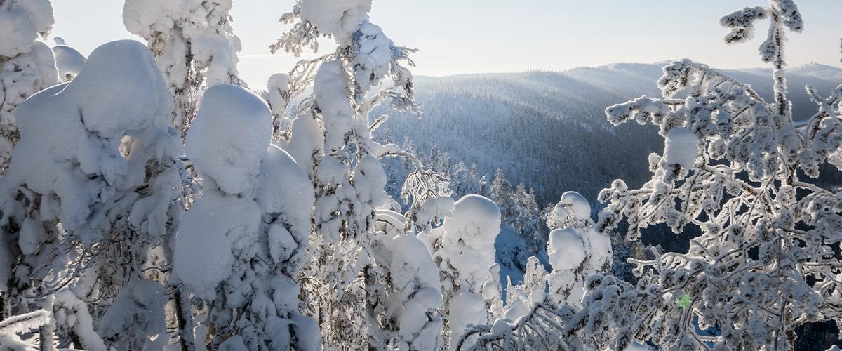 Luminen metsä, taustalla vuoria