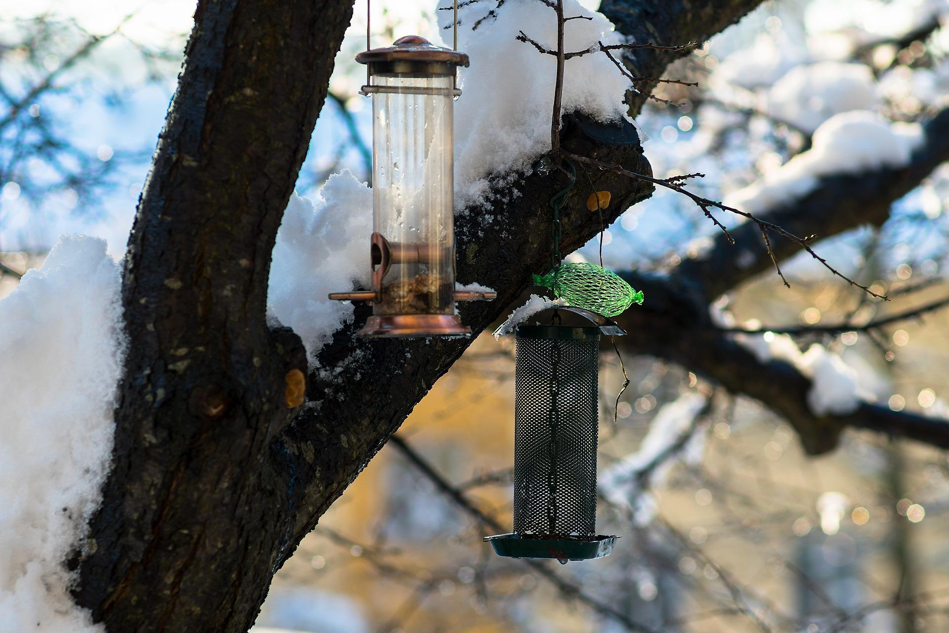 Lumisessa puunhaarassa roikkuu kaksi lintujen ruokinta-automaattia. Toisen vierellä on vihreässä verkossa talipallo.
