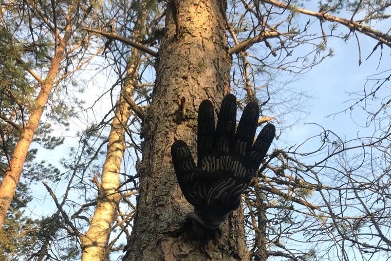 Alaviistosta kuvattuja mäntyjä. Yläpuolella näkyy taivas. Yhden puun rungossa olevaan katkenneeseen oksaan on laitettu musta käsine. Näyttää, kuin puusta kurottuisi käsi kohti katsojaa.
