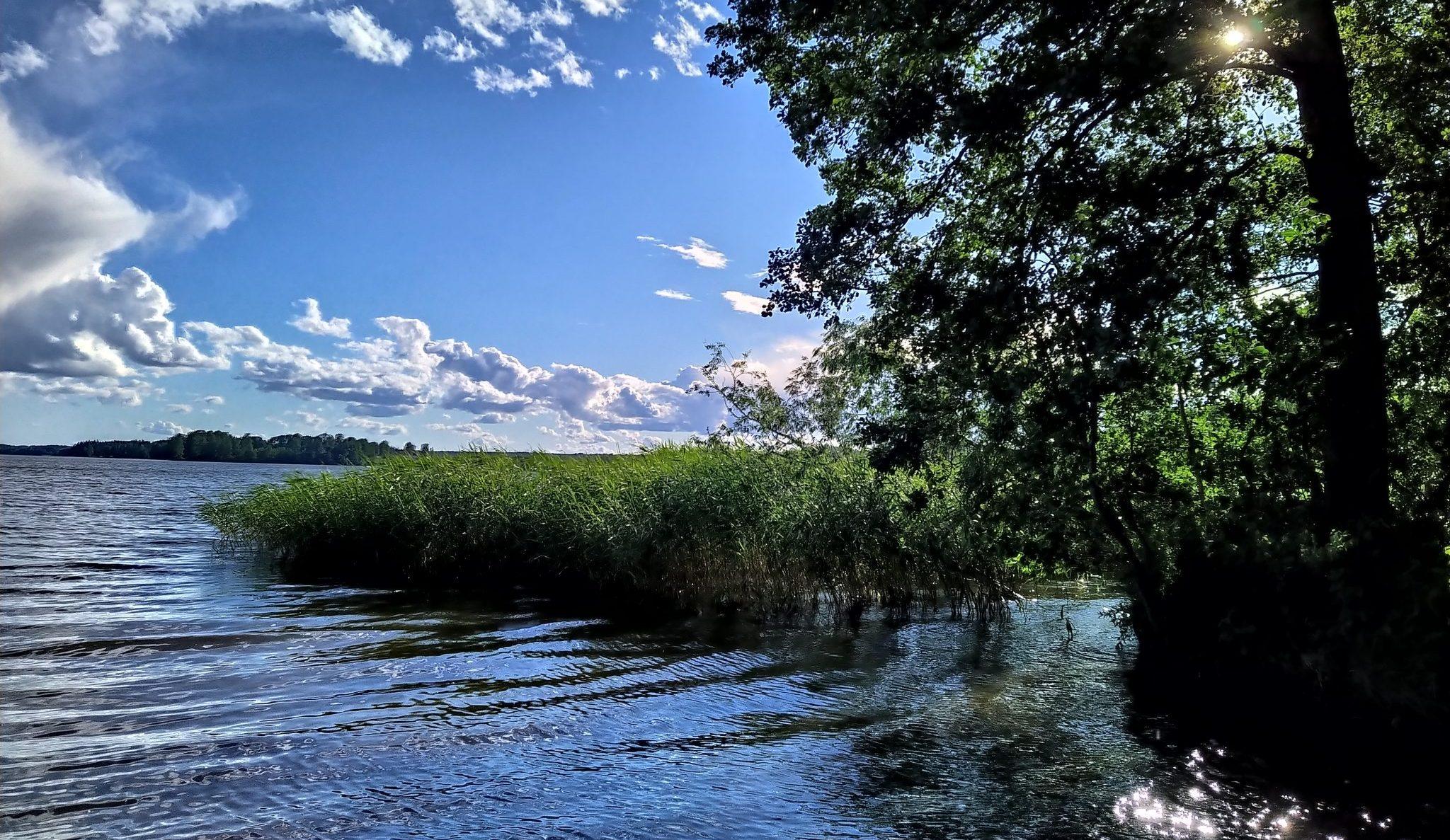 Järvimaisema, sini-valkoisia piviä, vihreitä puita ja kaislikkoa, auringon säteitä liplattavan veden pinnassa.